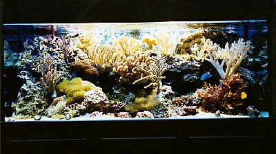 Aufbau von einem meerwasser aquarium for Salzwasser aquarium fische