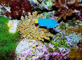 wozu aktivkohlefilter im aquarium