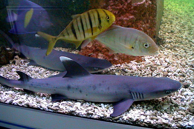 Meeresaquarium kai bachmann for Salzwasser aquarium fische